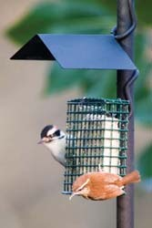 Basic suet cage w/ adaptor and weather guard