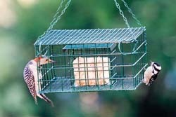 Caged Suet Feeder